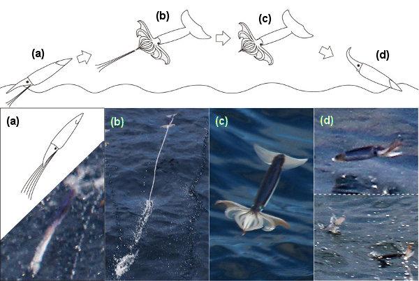 calamares voladores Wakan
