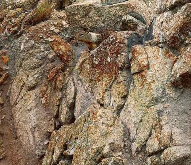 camuflaje ardilla
