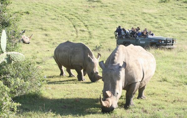 RhinosKrugerNational