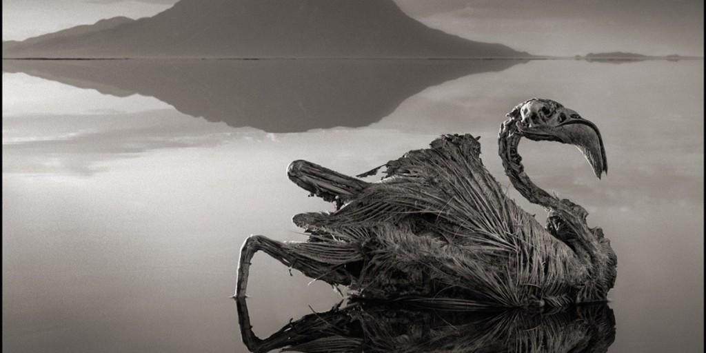 lago estatuas de sal1
