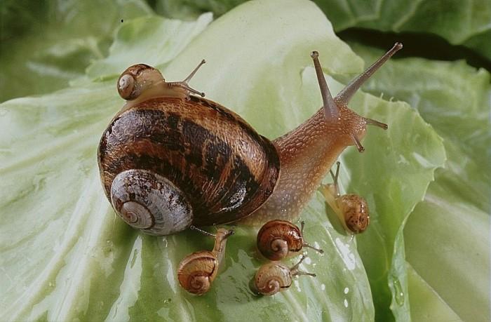 caracoles bebe